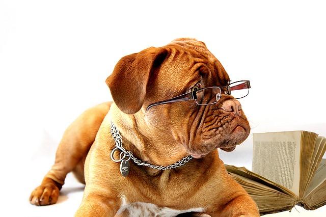 corso addestramento cane