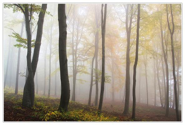 nebbia autunno