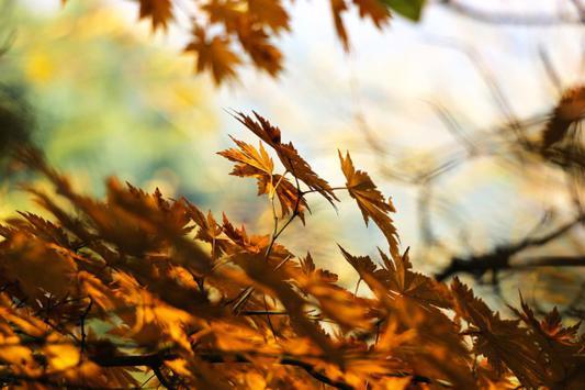 bobbio penice stagioni trebbia